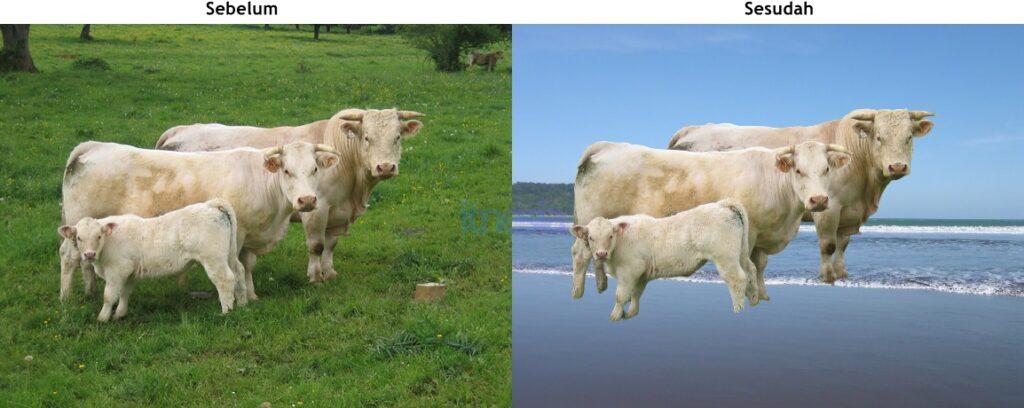 Foto Sebelum Dan Sesudah Mengganti Background Foto Dengan Gambar Lain